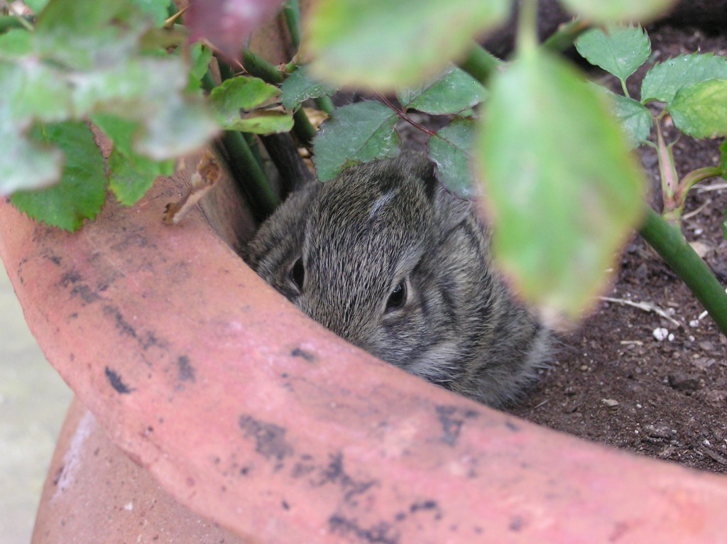 Whose Peeking Out of The Rose Pot?