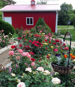 Four Seasons of Roses | Monthly Guide To Rose Care