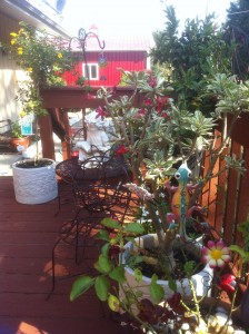Patio Plants Ready for Winter Protection