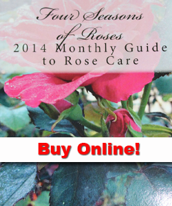 Purchase Four Seasons of Roses Online