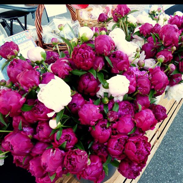Diane LaSauce Home, Garden, Life Peonies  photo credit: Diane La Sauce