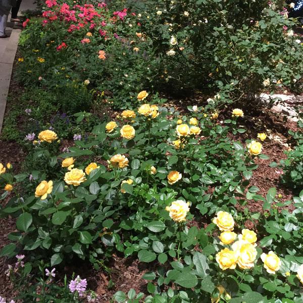 Julia Child in Bloom