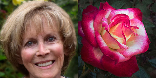 Sally Long | 2015 American Rose Society Convention Photography Panelist |Her Double Delight Preview
