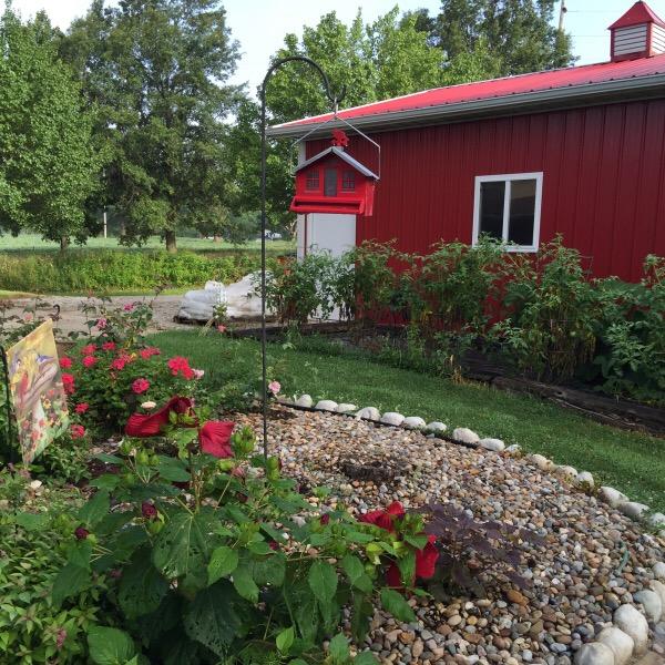 Proven Winners 'Summerific' Hibiscus