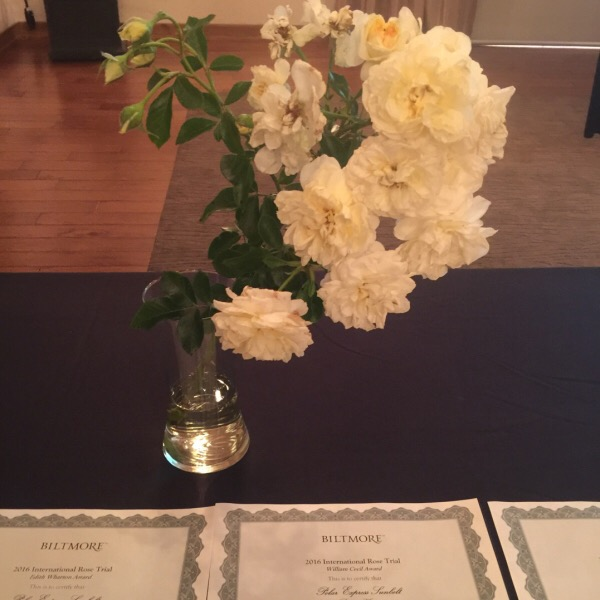 Polar Express™ Sunbelt® Rose | Sweeps the Show winning Best Floribunda | Best Growth Habit | Best Overall Rose