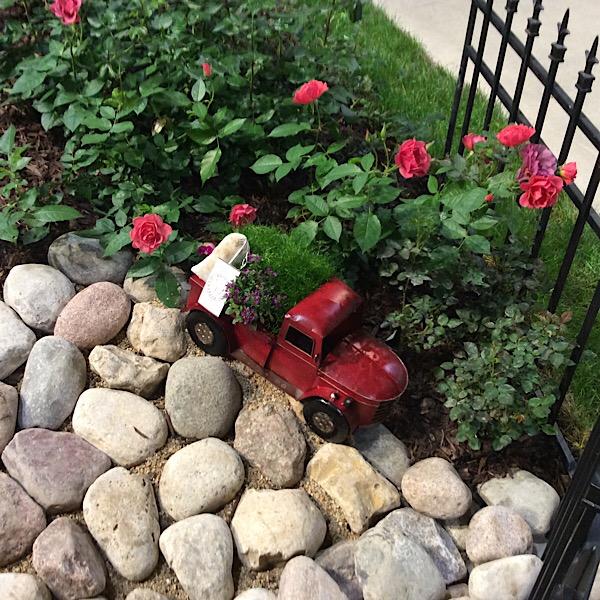 Miniature Roses Make Wonderful Display Gardens